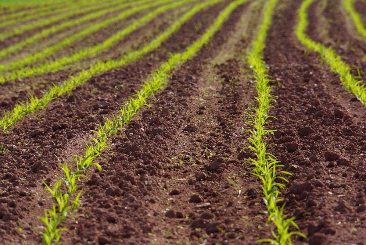 Die Bodenqualität ist entscheidend für den Ertrag, den wir mit landwirtschaftlichen Methoden gewinnen können.