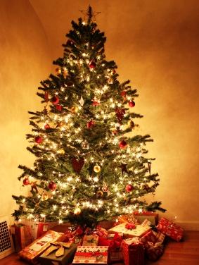 Tannen dienen uns als Weihnachtsbäume, die jedes Jahr prunkvoll geschmückt werden. (Quelle: © iStockphoto.com/ Matthew Snider)