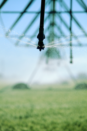 Ein wohlüberlegter Einsatz von Wasser und Düngemitteln kann Abhilfe verschaffen.