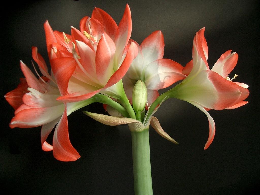 In Zukunft könnte das System zu elektronischen Sensoren weiterentwickelt werden, die in der freien Natur erfassen, wann bestimmte Hormone zur Blütenbildung oder anderen Veränderungen in der Pflanze freigesetzt werden.