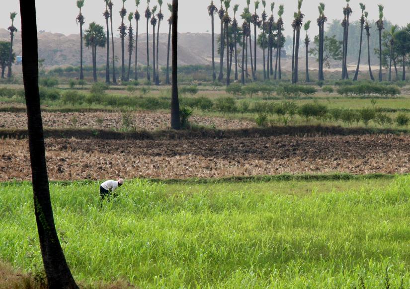 Fast die Hälfte der Fläche des Bundesstaates Andra Pradesh wird für die Landwirtschaft genutzt. Sie stellt die Haupteinkommensquelle der Bevölkerung dar.