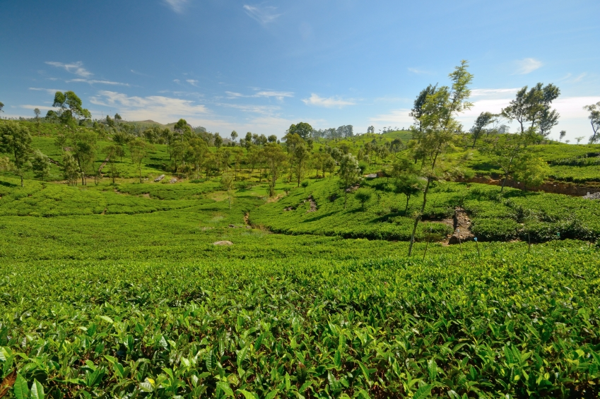 Monokulturen ist eine Bodenbewirtschaftungsform, in der über Jahre hinweg nur eine Kulturpflanzenart angebaut wird. Sie stellt eine einseitige Belastung für die Umwelt dar und wirkt sich langfristig negativ aus.