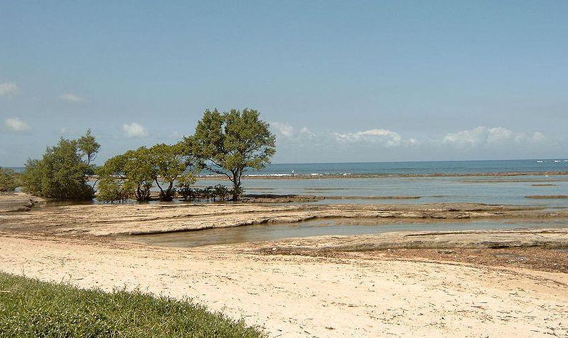 Mangroven sind weltweit bedroht durch andere, wirtschaftlich attraktivere Landnutzungen: die Landwirtschaft, Aquakulturen sowie um Raum zu schaffen für neue Siedlungen und Hotels. Mangrovenholz wird zudem als Brennstoff und zur Holzkohleherstellung verwendet.