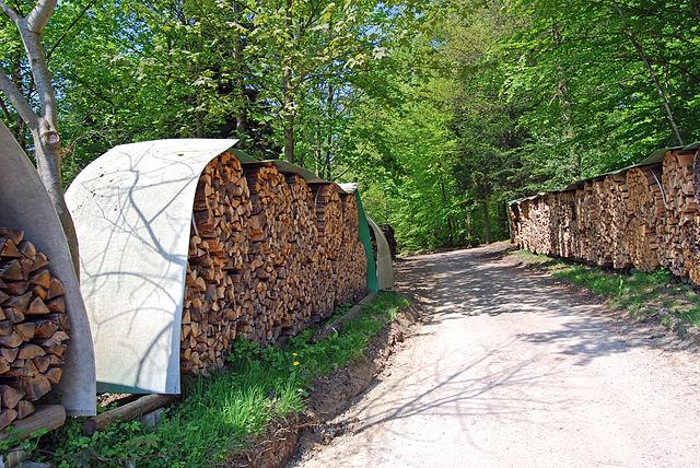 Holz ist der Rohstoff, aus dem sich Lignin zur Herstellung von Kraftstoffen und Ausgangsstoffen für die chemische Industrie gewinnen lässt. (Quelle: © Gargolla/ Wikimedia.org; CC BY-SA 3.0)