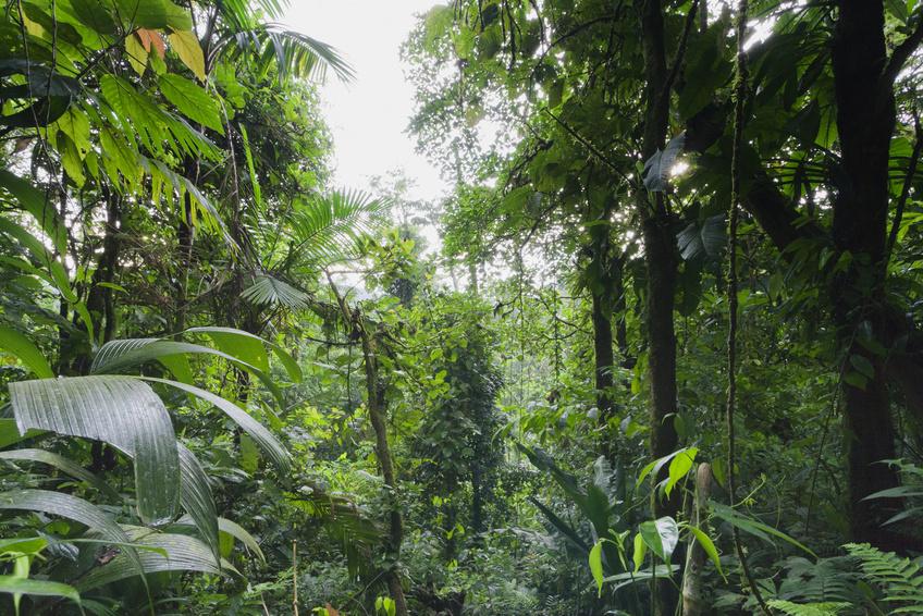 Tropische Regenwälder gelten als besonders artenreiche Ökosysteme. Ihre Artenvielfalt ist auch ein Schlüssel zu ihrer Produktivität. (Bildquelle: © amelie/fotolia.com)