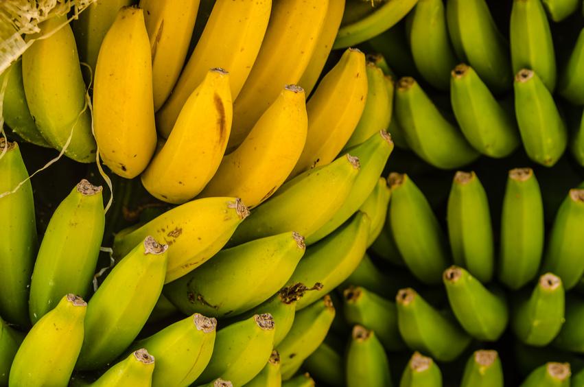 Bananen sind hierzulande nach Äpfeln das zweitbeliebteste Obst. (Bildquelle: © Feliz Photo - Fotolia.com)