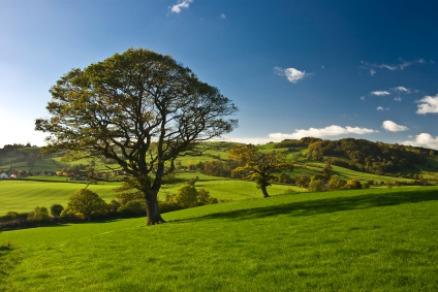 Eine hundertjährige Eiche bindet pro Jahr 5.000 Kg Kohlendioxid.