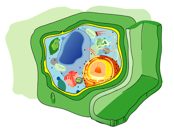 Bei der Systembiologie geht es nicht mehr nur darum zu verstehen, welche Funktionen die Komponenten einer Pflanzenzelle haben, sondern welche Interaktionsnetzwerke und -muster sie bilden.