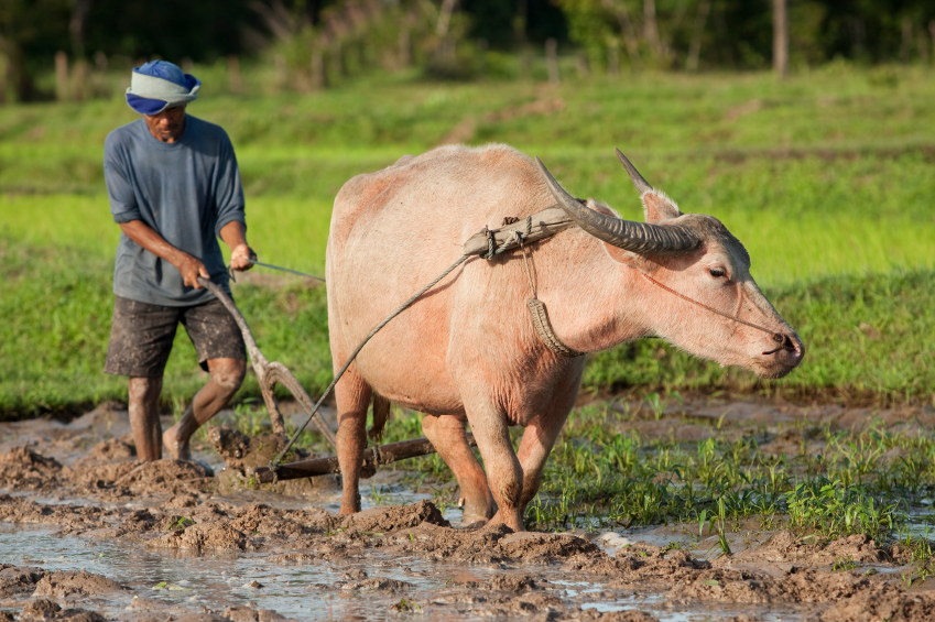 Ein Bauer pflügt das Feld. Der Mensch nimmt auf vielfältige Weise Einfluss auf die ihn umgebende Natur.