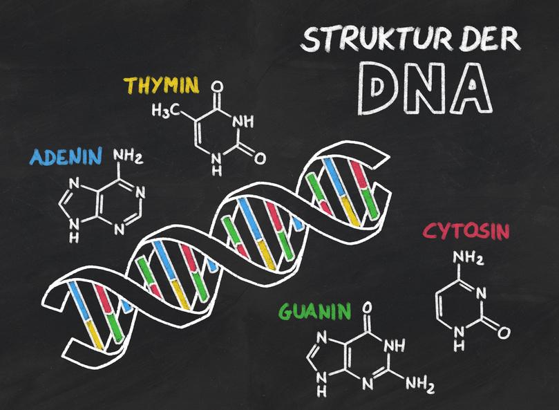 Das neue System beruht auf einer Kombination eines abgewandelten Cas9-Proteins aus dem Neunauge, das mit einer speziellen Deaminase einen Einzelstrangbruch durchführt. Das Deaminase-Enzym ist in der Lage, ein einzelnes Nukleotid in einem DNA-Strang zu verändern.