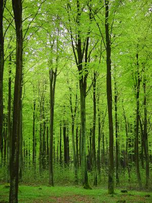 Informationen über die Vielfalt in den Wäldern. (Quelle: © iStockphoto.com/Willem Dijkstra)