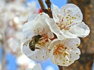 Insekten übernehmen eine wichtige Aufgabe in der Natur: sie bestäuben Blüten.