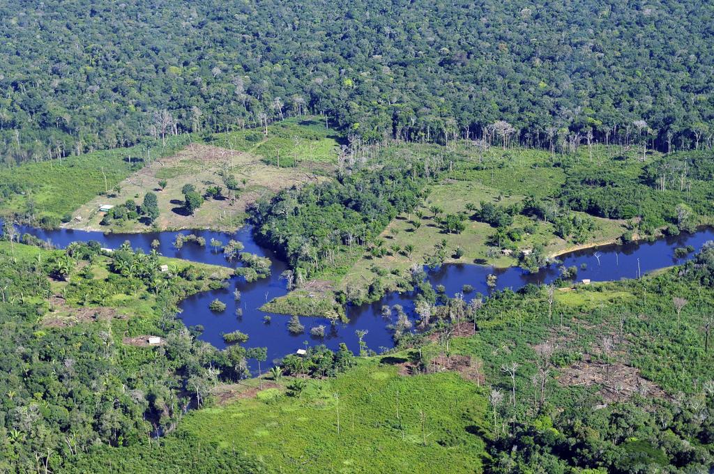 Brachiaria-Gräser sind tropische Pflanzen. Sie werden beispielsweise im tropischen Regenwald von Brasilien (hier: Amazonas) als Futterpflanzen angebaut.