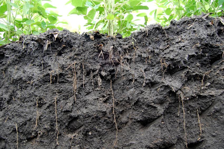 In der Rhizophäre, dem Boden unmittelbar um die Wurzeln, finden komplexe Interaktionen von Pflanzen, Boden und Mikroben statt.