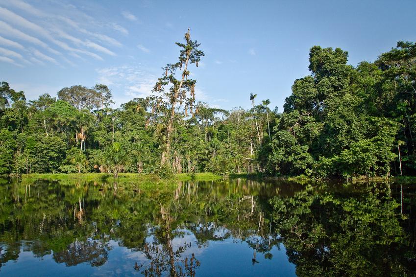 Im artenreichen Amazonasgebiet begibt man sich auf die Suche nach neuen pflanzlichen Wirkstoffen. (Bildquelle: © Fotos 593 / Fotolia.com)