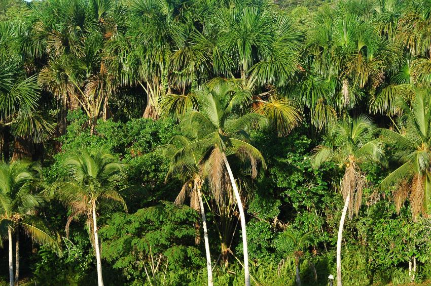 Zu den durch ungebremste globale Erwärmung besonders gefährdeten Regionen zählt u.a. auch der Amazonas-Regenwald.