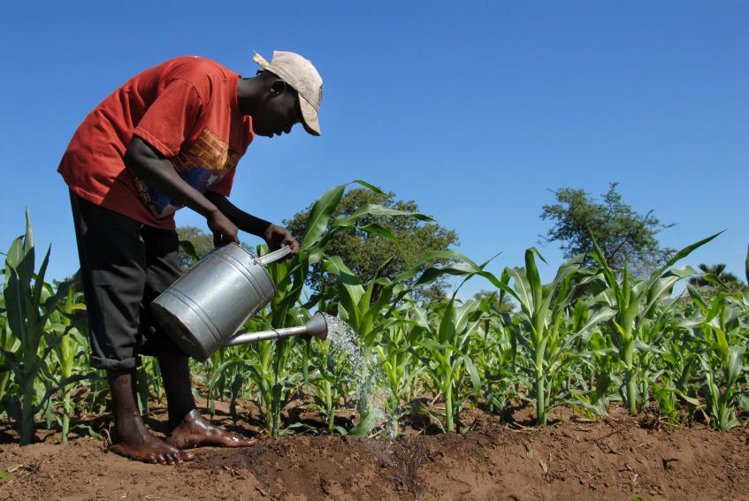 Zentraler Ansatz ist es, gemeinsam mit den Betroffenen in der Schwerpunktregion Afrika südlich der Sahara an Lösungen zur Bekämpfung von Hunger und Mangelernährung zu arbeiten. (Bildquelle: © iStock.com / africa924)