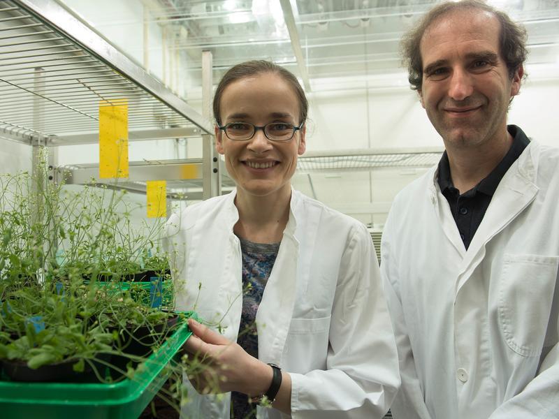 Barbara Klisch und Peter Dörmann vom Institut für Molekulare Physiologie und Biotechnologie der Pflanzen an der Universität Bonn. Im Vordergrund zu sehen sind besagte Arabidopsis-Pflanzen, deren Chloroplasten die Forscher unter die Lupe genommen haben.