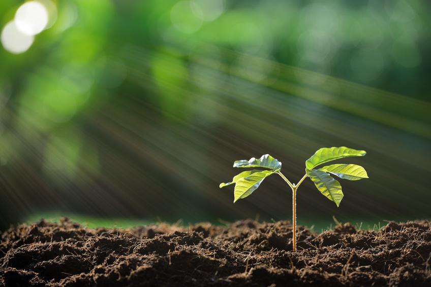 Pflanzenwurzeln erhalten vom Spross ein Signal über die oberirdischen Lichtverhältnisse. (Bildquelle: © amenic181/Fotolia.com)