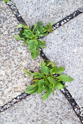 Pflanzen in Städten leben kürzer, wachsen dafür aber schneller. (Quelle: © alpineva / Fotolia.com)