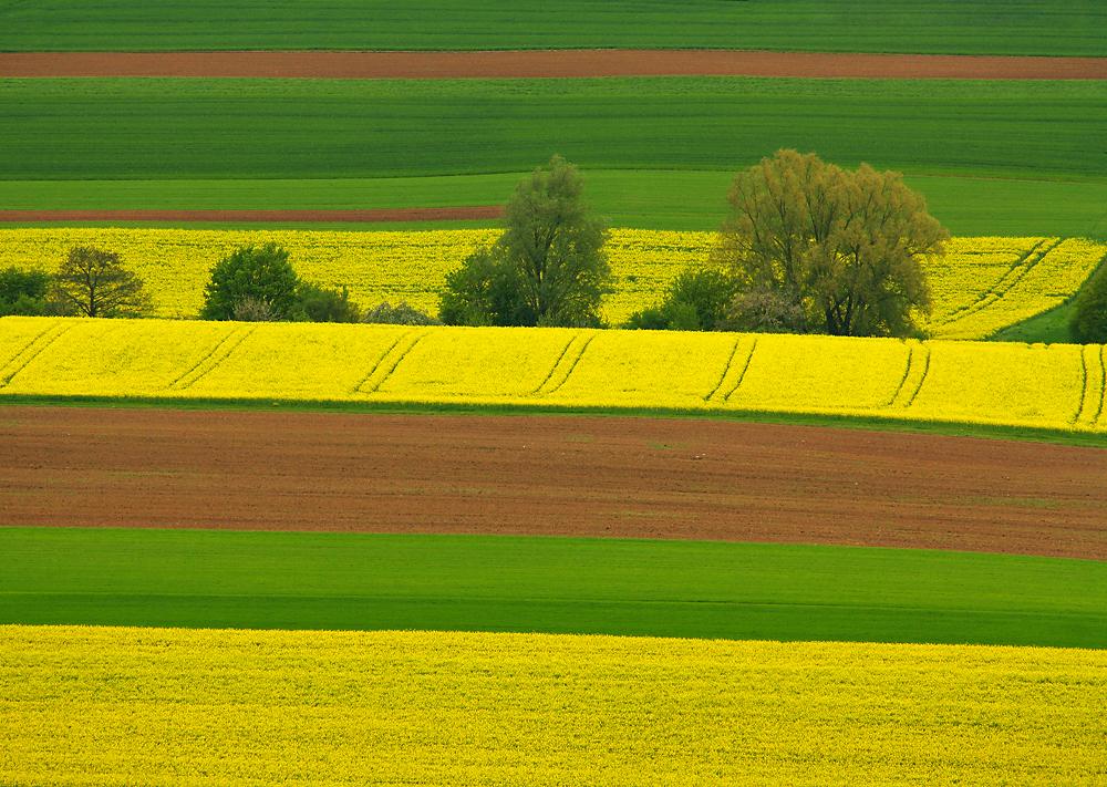 Die Landwirtschaft befindet sich tendenziell auf gutem Weg. Optimierungspotenzial besteht dennoch. Welchen Beitrag kann die Pflanzenforschung zur Nachhaltigkeitssteigerung leisten? (Bildquelle: © Oliver Mohr/ pixelio.de)