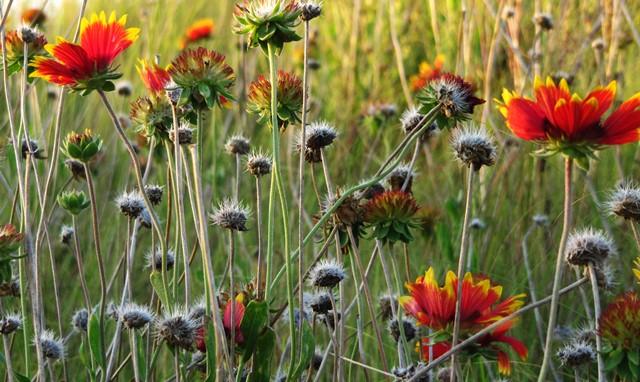 Stirbt eine Art aus im Ökosystem hat dies vielfältige Auswirkungen auf andere Arten (Quelle: © Rainer Sturm / PIXELIO www.pixelio.de).