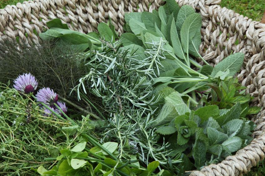 Der Mensch nutzt seit jeher Pflanzen zu medizinischen Zwecken. (Quelle: © iStockphoto.com / hmproudlove)