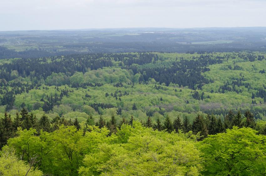 Auf der Erde gibt es derzeit 3,04 Billionen Bäume - bei 7,2 Milliarden Menschen auf der Erde ergibt sich ein Verhältnis von 422 Bäumen pro Mensch. (Bildquelle: © avior6720 - Fotolia.com)