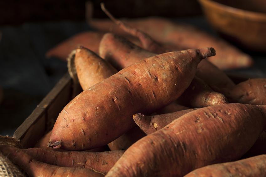 Die Süßkartoffel nimmt weltweit den 7. Platz der wichtigsten Nahrungspflanzen ein. (Bildquelle: © Brent Hofacker / Fotolia.com)