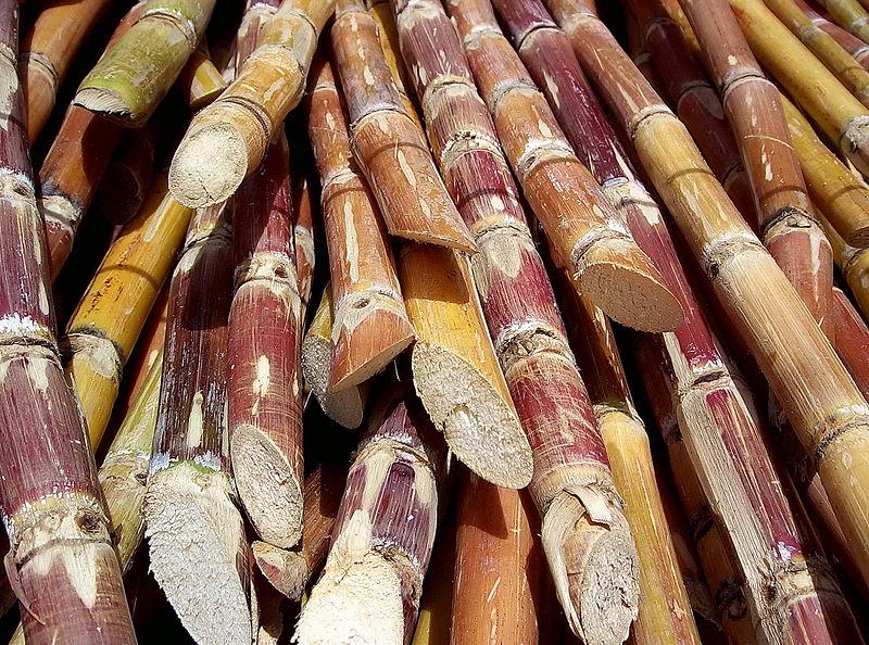 Der Zucker aus dem Zuckerrohr kann zu Biokunststoff verarbeitet werden. Das Zuckerrohrwachs wird in Kosmetik verwendet.