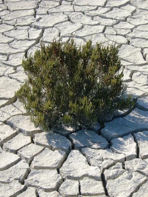 Hitze und geringe Niederschläge lassen die Böden austrocknen. (Quelle: © Julia Schäfer / pixelio.de )