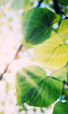 Künstliche Blätter sind ein neuer Ansatz, um die Energieprobleme der Menscheit zu lösen. (Quelle: © Dengs / pixelio.de)