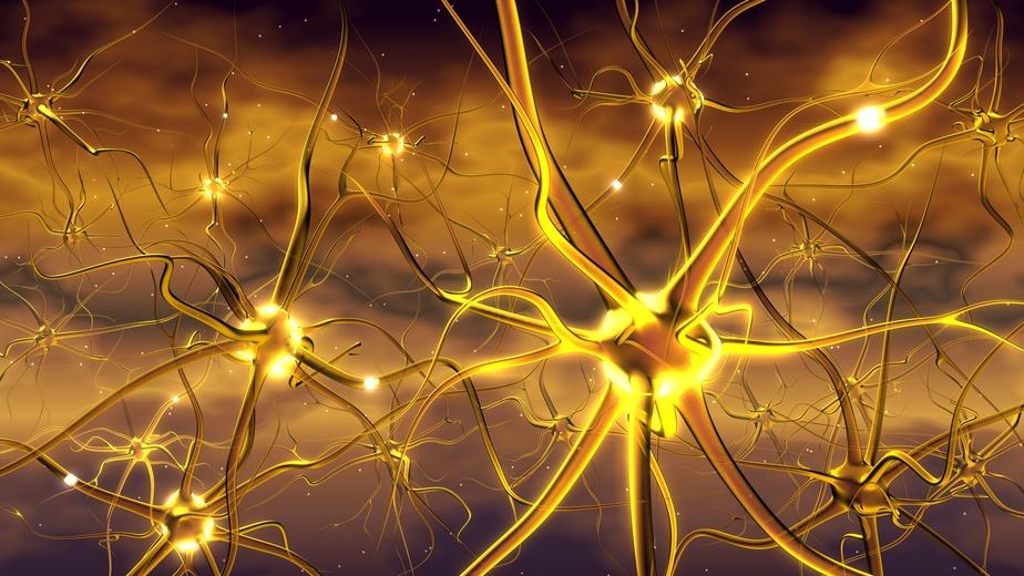 Pflanzen besitzen zwar keine Nervenzellen, aber sie nutzen ebenfalls elektrische Signale, um schnell auf Umweltreize reagieren zu können. (© Alex / Fotolia.com)