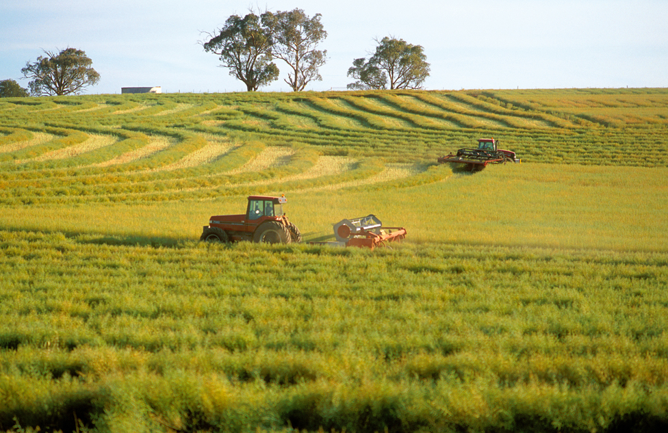 Als einer der Hauptemittenten von Treibhausgasen steht die Landwirtschaft in der Verantwortung. (Bildquelle: © Gregory Heath, CSIRO/CC BY 3.0)