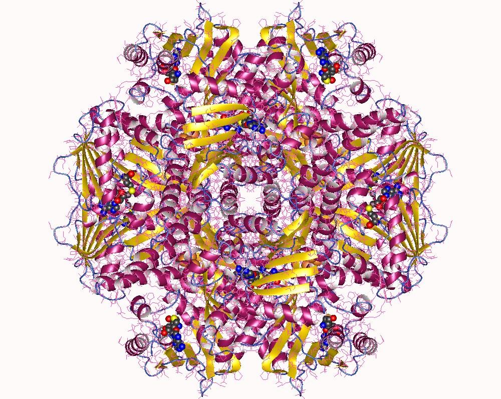 Visualisierung einer Methyltransferase. Enzyme ihrer Art sind damit beschäftigt, Methylgruppen an bestimmte Biomoleküle zu heften. Dies spielt bei bestimmten biochemischen Stoffwechsel- oder Produktionsprozessen eine Rolle oder aber im Zusammenhang mit der epigenetischen Regulation.