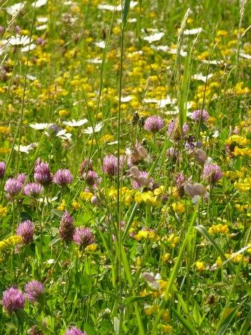 Auch Graslandschaften beherbergen viele unterschiedliche Pflanzenarten. (Quelle: © PeterA / pixelio.de)