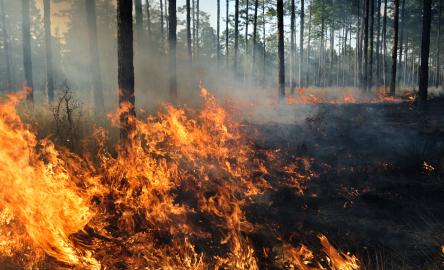 In einem Szenario gibt es ab 2015 weltweit keine Waldrodungen mehr.