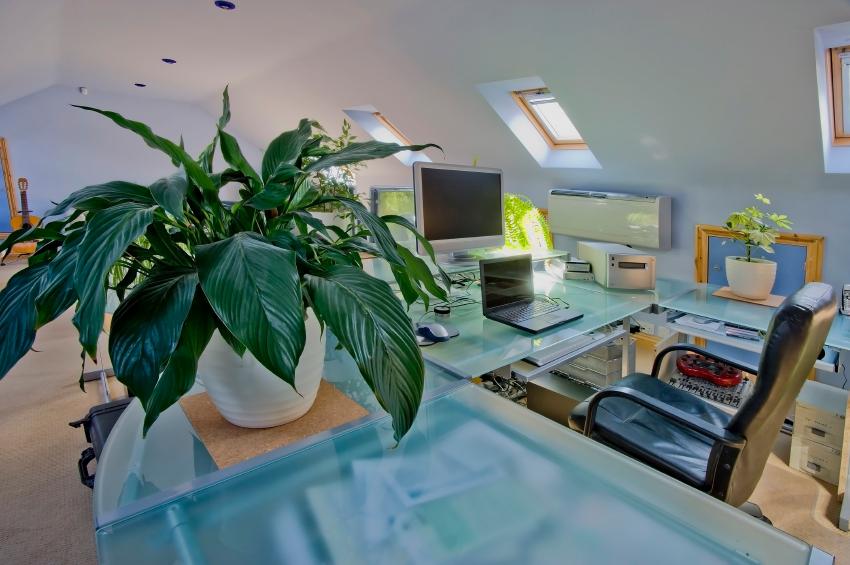 Zimmerpflanzen dürfen in keinem Büro fehlen. Denn sie wirken sich positiv auf die Mitarbeiter aus. (Bildquelle: © iStock.com/davidmartyn)
