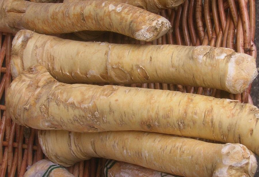 Es sind die Senfölglykoside, die den Meerrettich (Armoracia rusticana)zwar vor hungrigen Insekten schützen, ihn aber umso beliebter unter Köchen und Gourmets machen.