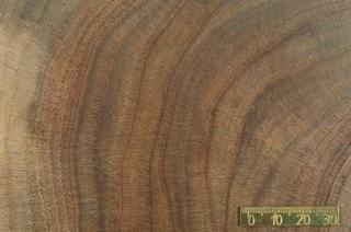 Jahrringe in Tropenholz (Cedrela odorata). Die Analyse der stabilen Isotope des Sauerstoffs in den Jahrringen ermöglicht eine exakte Rekonstruktionen des Niederschlags (Quelle: © Dr. Ingo Heinrich, GFZ).