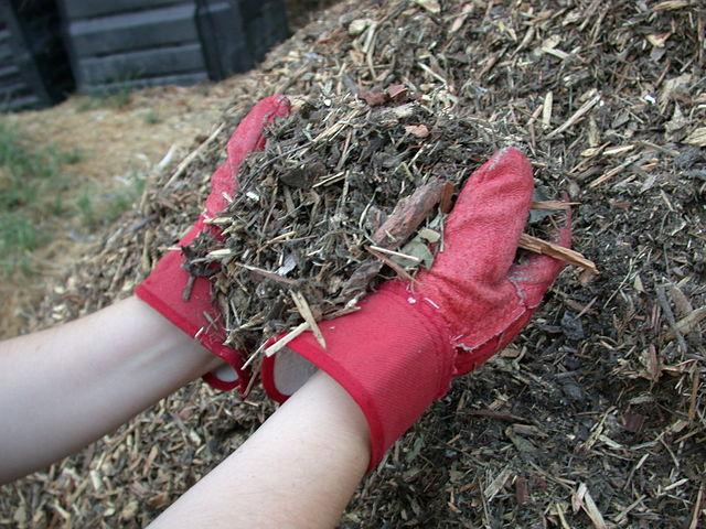Mulch besteht aus unverottetem organischem Material, mit dem im Gartenbau und in der Landwirtschaft Böden bedeckt werden.