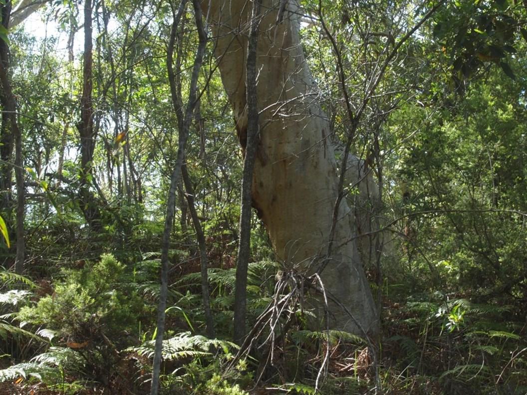Im australischen Great-Sandy-Nationalpark wachsen auf engem Raum unterschiedlichste Pflanzenarten. Ein idealer Ort für die Untersuchung des Phytomikrobioms. (Bildquelle: © Lui Weber)