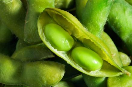 Das Genom der Sojabohne gehört zu den größten bisher wenigstens teilweise sequenzierten Pflanzen (Quelle: © iStockphoto.com/ YinYang ).