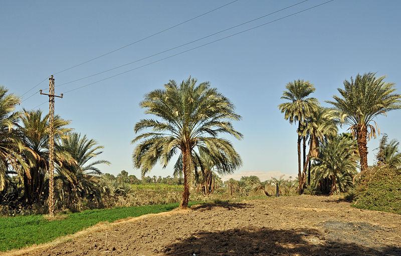 Landwirtschaftliche Praktiken in ariden Gebieten (wie z.B. Ägypten) wirken sich positiv auf förderliche Bodenbakterien aus. (Quelle: © Marc Ryckaert / Wikimedia.org; CC BY 3.0)