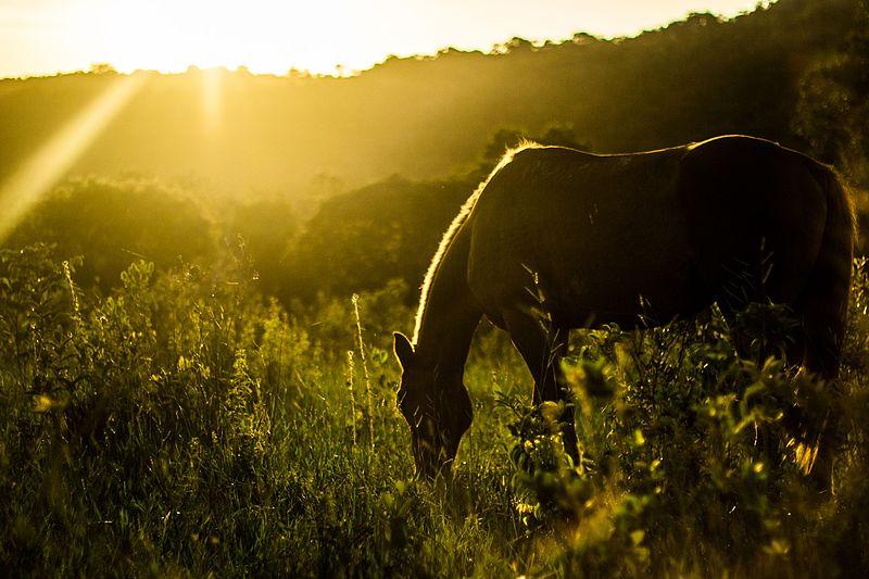 Die üppige Vegetation tropischer Regionen, in denen auch der brasilianische Bundestaat Mato Grosso liegt täuscht. Tropische Böden sind bekannt dafür, phosphatarm zu sein und darüber hinaus Unmengen des zugeführten Phosphats langfristig zu binden.