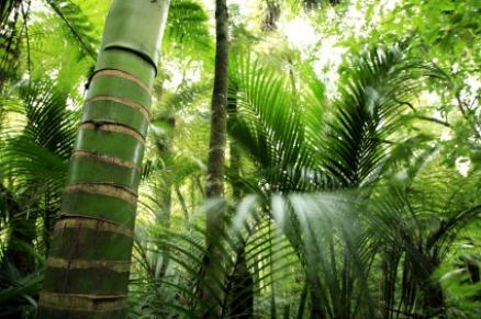 Tropenwälder beheimaten die größte Artenvielfalt. Viele Arten sind vermutlich noch gar nicht bekannt.
