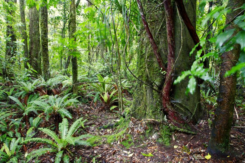 In tropischen Wäldern sind zahlreiche verschiedene Pflanzenarten auf kleiner Fläche beheimatet.