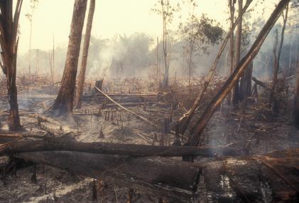 Die Ausmaße der Waldzerstörung können über regelmäßig gesammelte Satellitendaten kontrolliert werden.