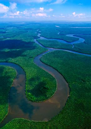 Bis Wälder die Erde bedeckten, mussten erst holzige Pflanzen entstehen. (Quelle: © iStockphoto.com/ Mayumi Terao)