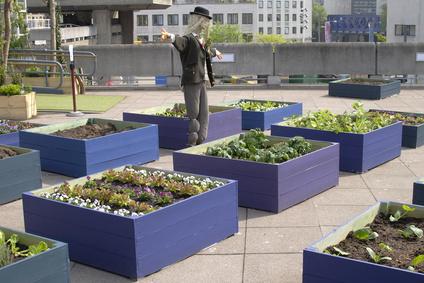 Ackerflächen werden knapper und neue Ideen sind gefragt: Urban gardening, also die Nutzung von städtischen Flächen, ist ein Ansatz.